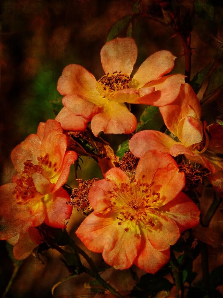 Multiflora Roses by PineSinger