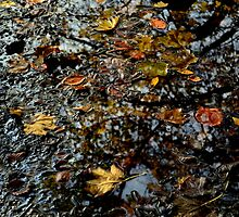 autumn leaves reflections by lfoliveira