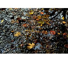 autumn leaves reflections Photographic Print