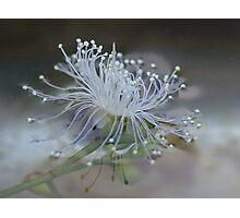 Fallen Water Blossom Photographic Print