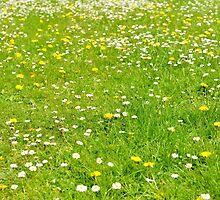 Green grass field by skyfish