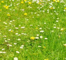 Green grass field Sticker