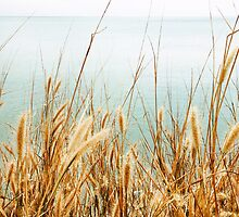 Grass By The Ocean by visualspectrum