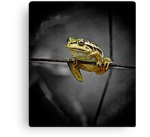 Frog on the wire Canvas Print