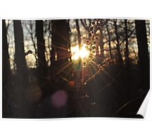 wooded sunset  Poster