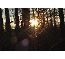 wooded sunset  Photographic Print