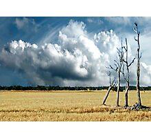 Four tree's  Photographic Print