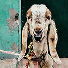 Goat Portrait by visualspectrum