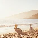 Pelicans On Malibu Beach by visualspectrum