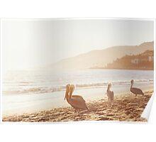 Pelicans On Malibu Beach Poster