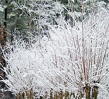 Crepe Myrtle Covered in Snow by gt6673