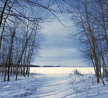 Wintertime At Sheldon Marsh by SRowe Art