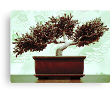 Jade Green Bonsai Canvas Print