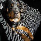 Rottweiler by Lilith Bill