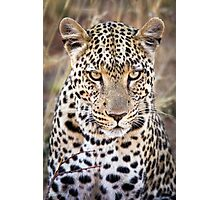 African Leopard Photograph Namibia Photographic Print