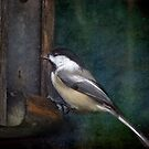 Chickadee at Feeder by enchantedImages