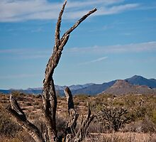 Black Bark Skeleton of the Sonoran by Lee Craig