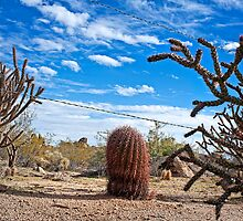 Guarding the Line in the Sonoran Desert by Lee Craig