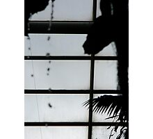 latticed silhouette  Photographic Print