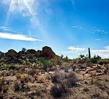 Sonoran Sunlight and the Wash by Lee Craig