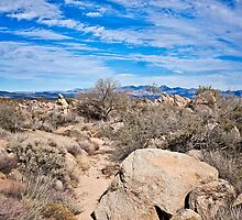 To the Sonoran Sky and Back by Lee Craig