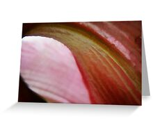 soft curves-in honor of cancer victims Greeting Card