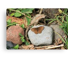 Brown Butterfly on a Rock Canvas Print