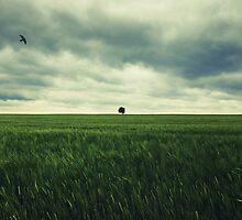 Alone by Norbert Fritz