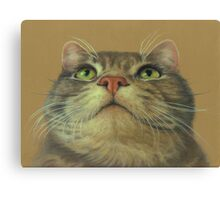 Cat Looking Up--a Pastel Drawing Canvas Print