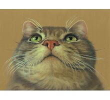 Cat Looking Up--a Pastel Drawing Photographic Print