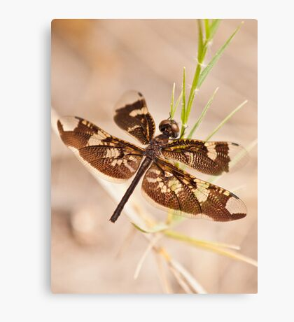 dragonfly insect photograph Canvas Print