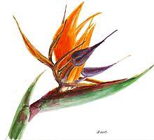Bird of Paradise Flower 2 by IrVia