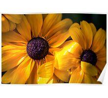 Yellow flowers / Fleurs jaunes Poster