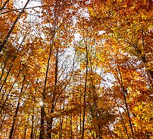 Fall colors / Couleurs d'automne by maophoto