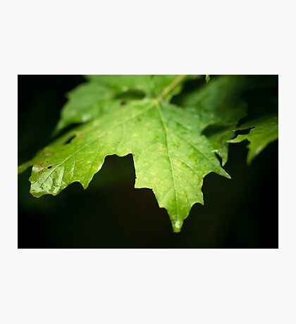 Green foliage / Feuillage vert Photographic Print