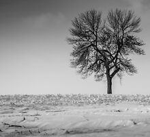 Solitary / Solitaire by maophoto