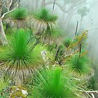Grass trees in the Mist by Penny Smith