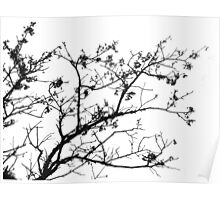 Bare tree Poster