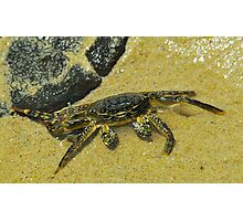 Clever Crab Photographic Print