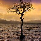 Millarochy Tree by Don Alexander Lumsden (Echo7)