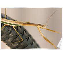 Stick Insect Poster