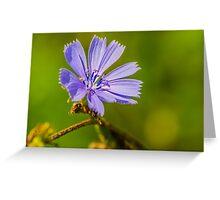 Chicory Greeting Card