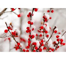 Red Berries in Winter Photographic Print