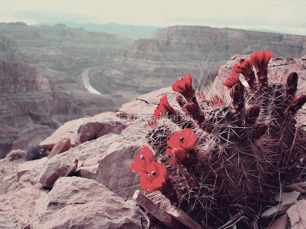Red Flower  by TAMARA MORAN