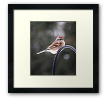 Bird on Snowy Day Framed Print