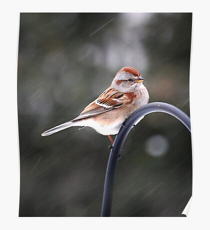Bird on Snowy Day Poster