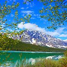Jasper National Park, Alberta by Harry Oldmeadow