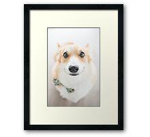 : Corgi Smiles : Framed Print