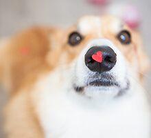 : Corgi - Valentine's Day : by kmkmonkay