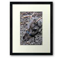 What! No Red Nose. Framed Print